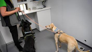 Utiliza Finlandia perros para detectar Covid-19 en aeropuerto