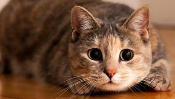 Envenenamiento masivo de gatos en Tamaulipas